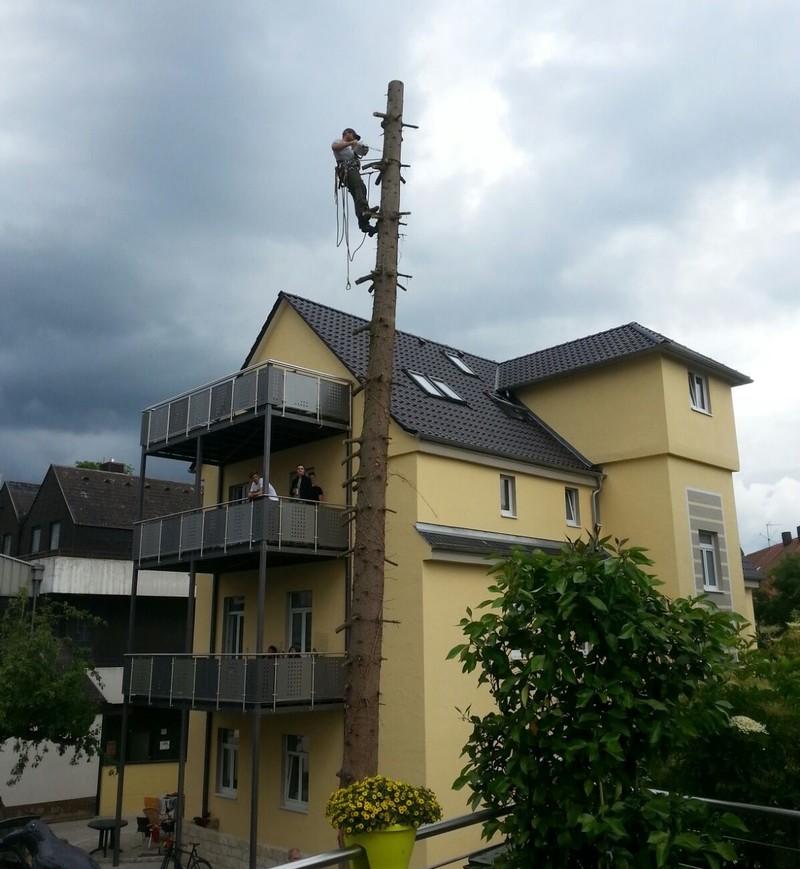 Baum fällen lassen Bayreuth
